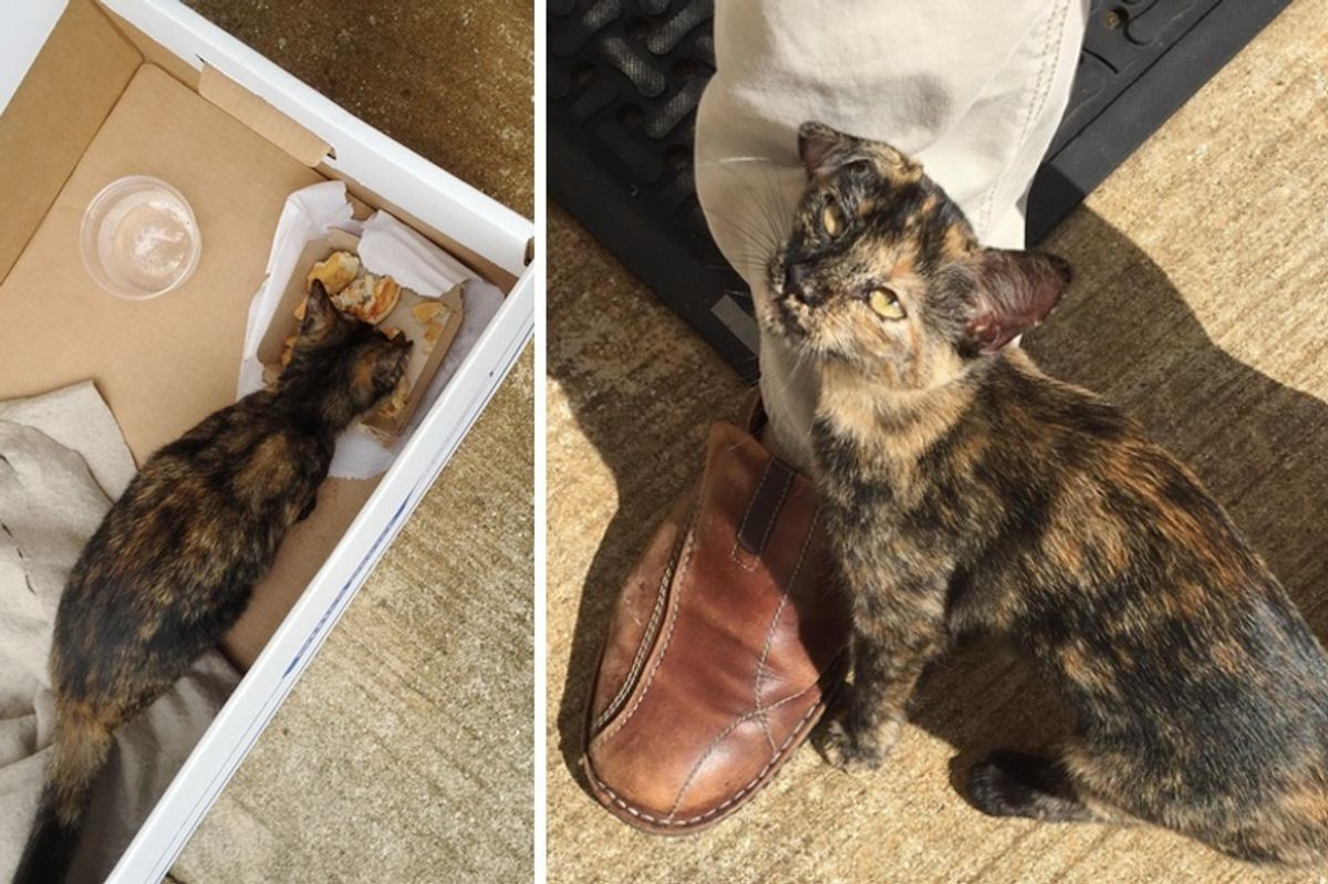 Stray Kitten Found Next to a Box and Leftover Burger Wouldn't Let Man Go without Her...