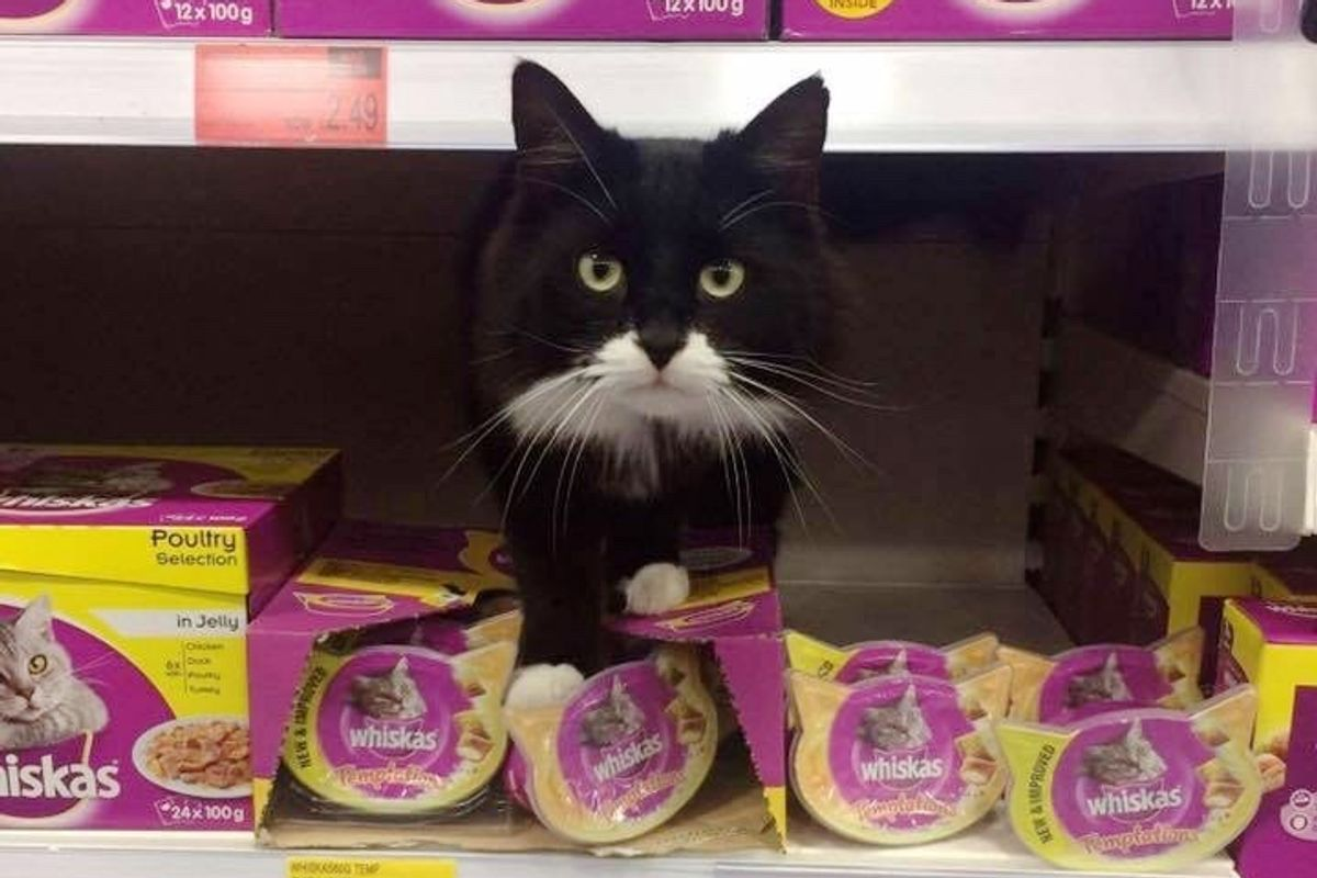 Woman Gave Stray Cat a Home But Surprised to Find Out He Had Claimed a Second Home Nearby…