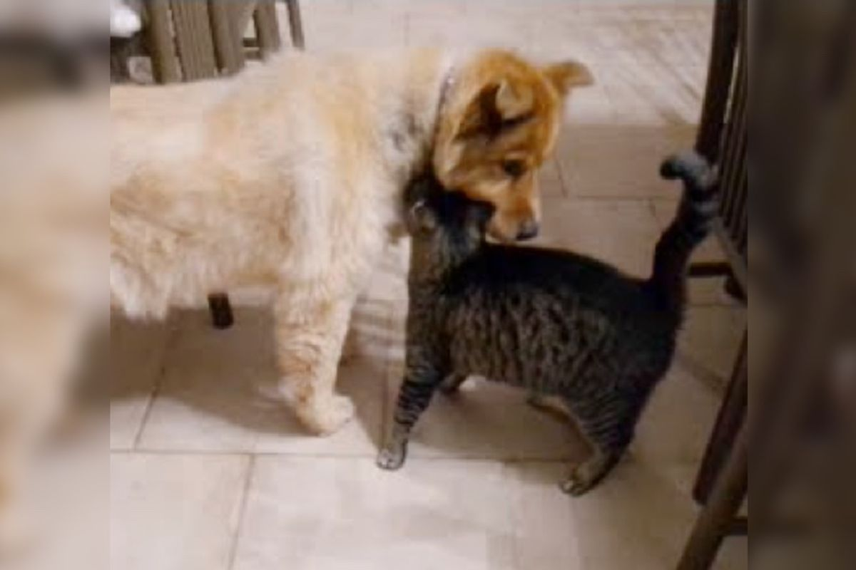 Cat Missed His Best Friend, Blind Dog, Every Day, Until She Came Back a Month Later...