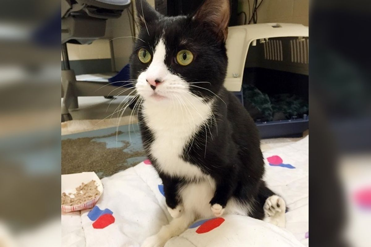 Kitten Who Hasn't Found Home Because of His Deformed Legs is Not Giving up...