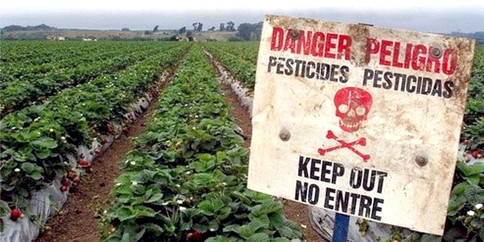 Jane Goodall: How Can We Believe It Is a Good Idea to Grow Our Food With Poisons?
