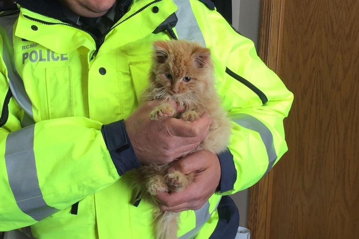 Men Find Half Frozen Kitten Meowing for Help on Highway and Rush to the Rescue...
