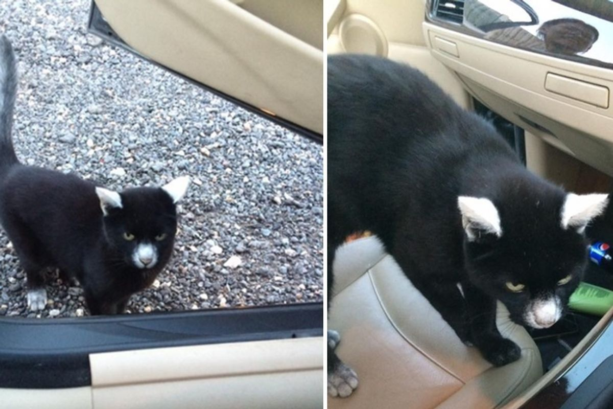 Man Gets Surprise Greeting From Friendly Cat with Unique Vitiligo Markings...