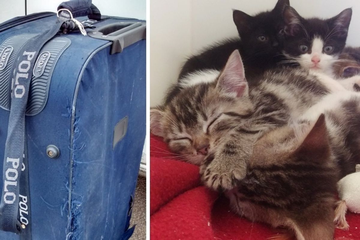Dog Walker Found Suitcase on Rail Track and Heard Meowing from Inside...