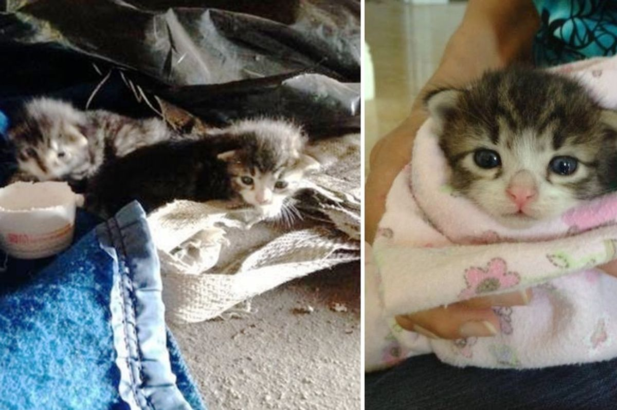 Workers Rush to Save 2 Tiny Kittens That Roll Out of Garden Clippings, Couple Years Later..