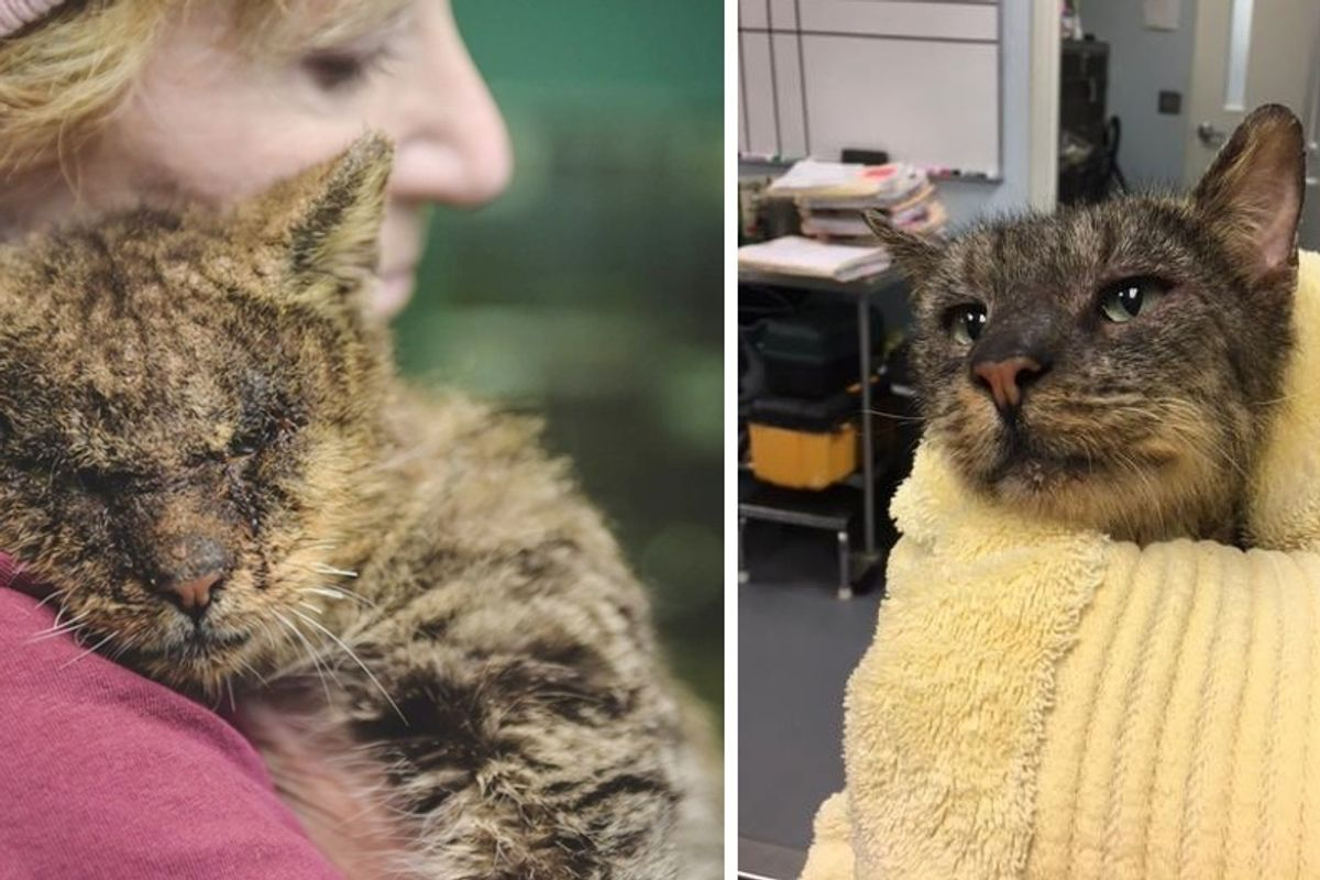 Woman Hugs Cat No One Would Touch and Changes His Life by Love.. (with Updates)