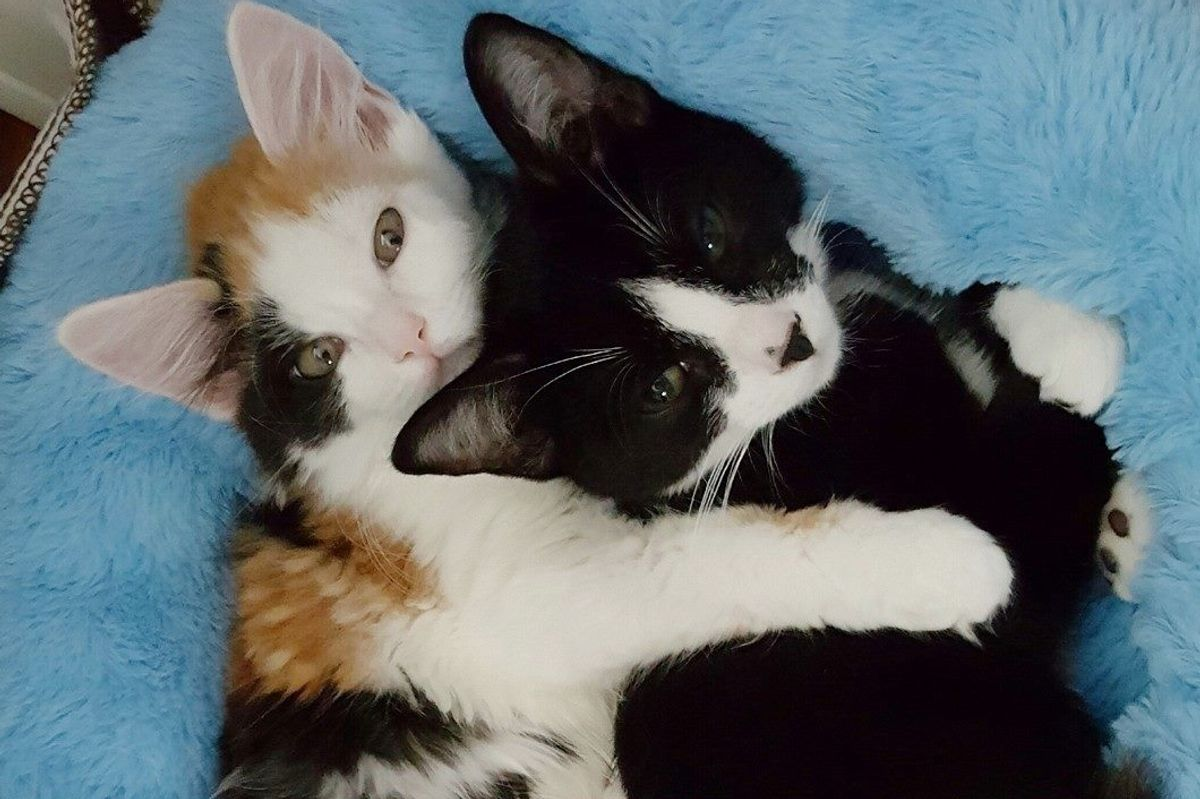 Paralyzed Cat Takes to Another Special Kitty Just Like Her and Won't Let Go...