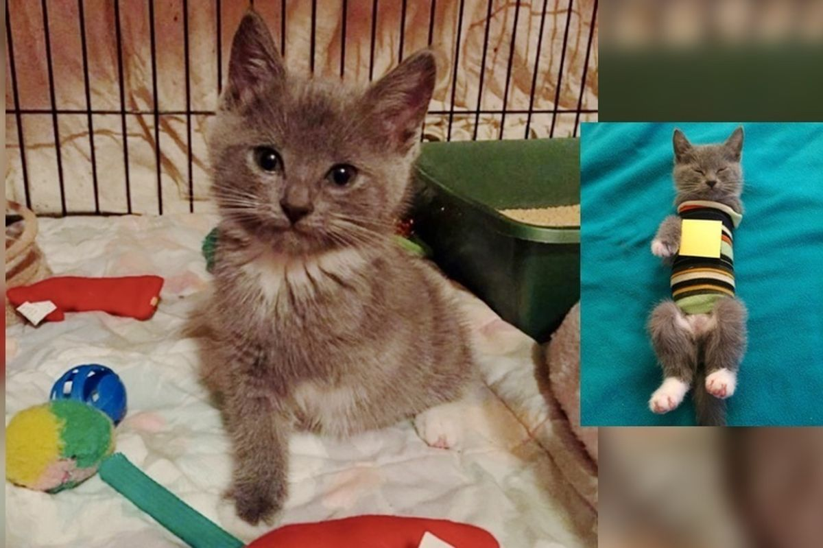 Woman Saves Kitten Born with Unprotected Heart and Helps Guard Her Heart..