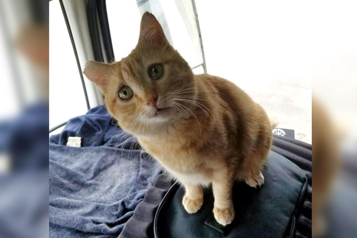 Trucker Takes a Chance on Rescued Cat and the Ginger Becomes His Purrfect Co-pilot..