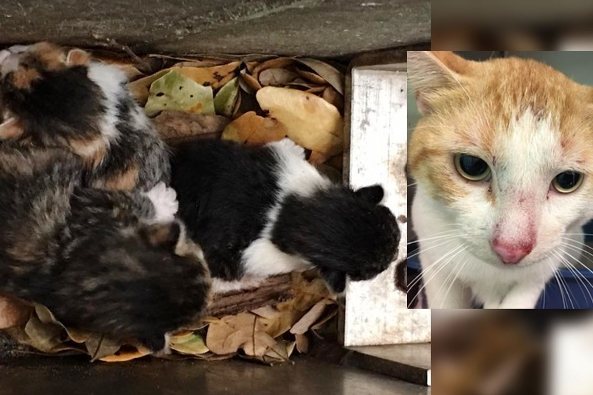 Tiny Kittens Saved from Drain Along with Their Dad...