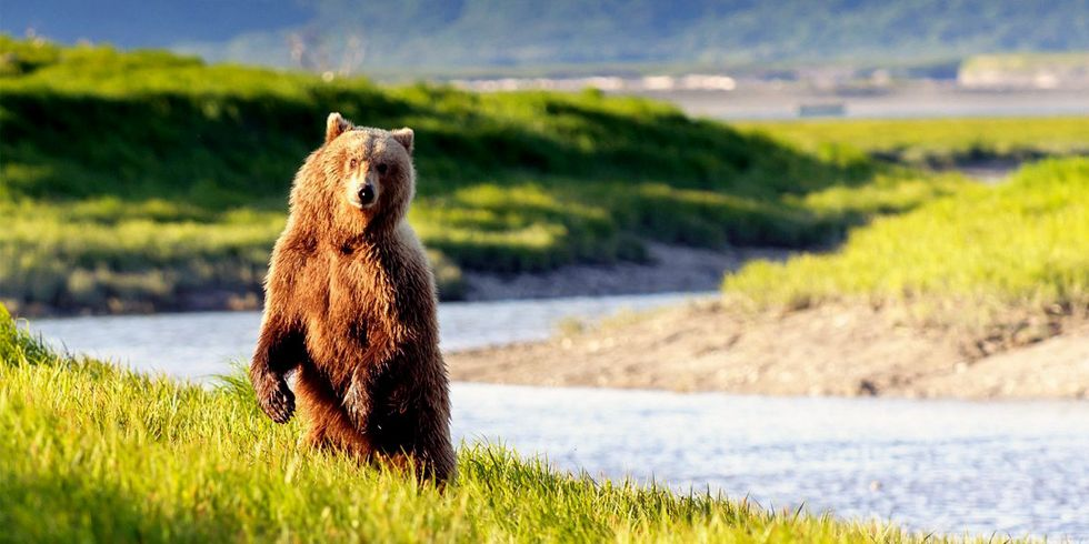 Senate Approves Legislation to Kill Wolves, Bears in Alaska Wildlife Refuges