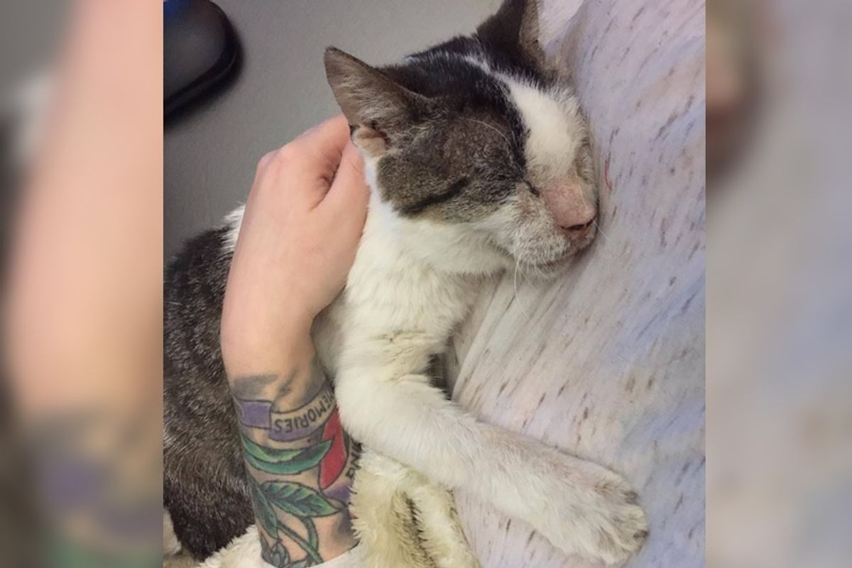 12 Year-old Cat Who Was Neglected, Receives Love And Can't Stop Hugging His Rescuers...