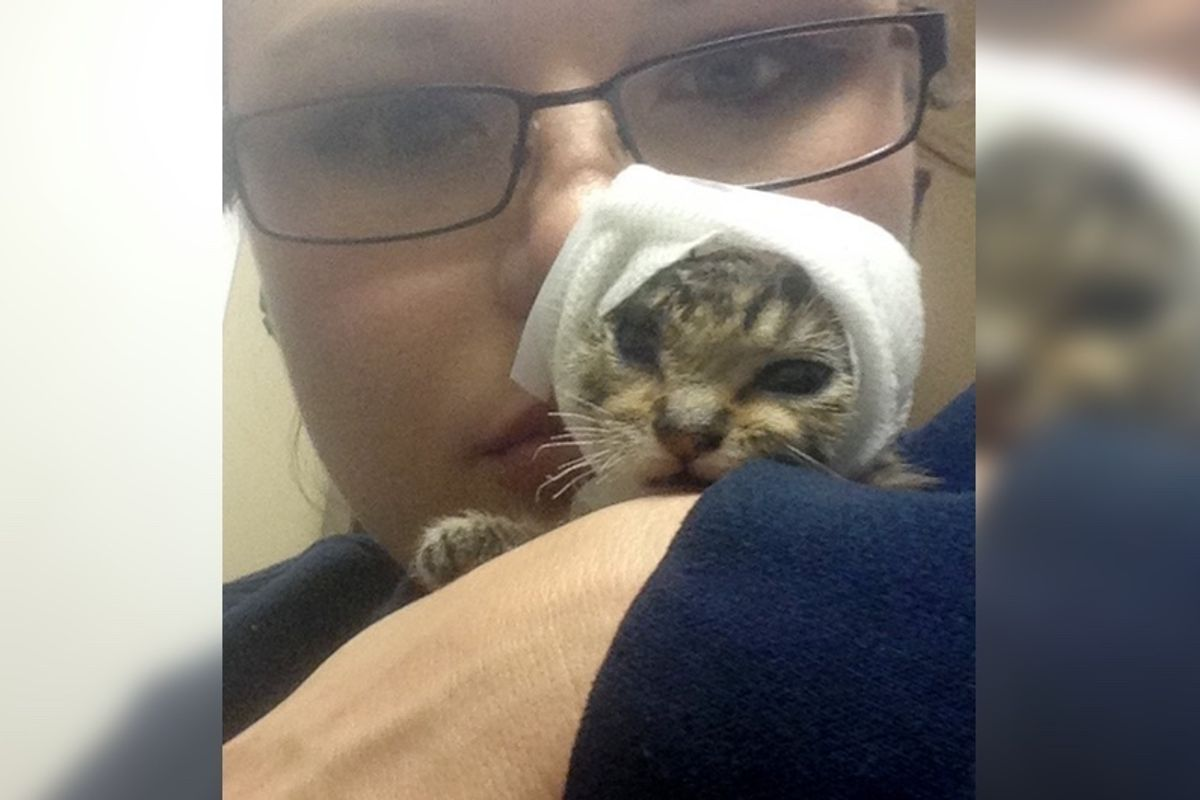 Woman Saves Injured Kitten That No One Would Touch, Now a Year Later...