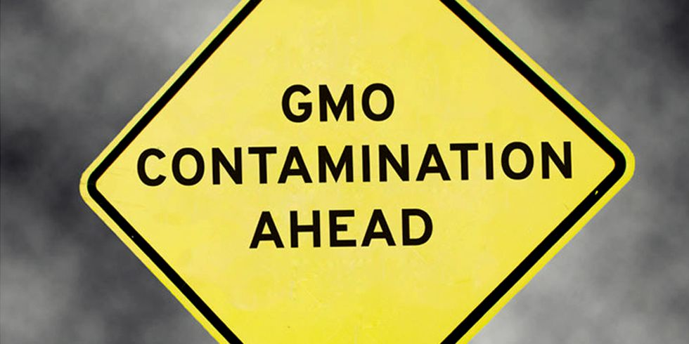 ​GMO-Ethanol Corn Contaminates Non-GMO White Corn Used in Tortillas
