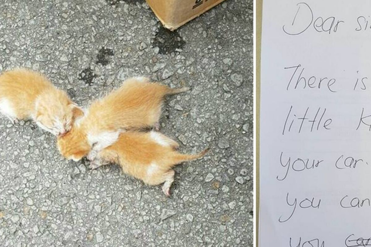 A Note From a Stranger Saved the Lives of 3 Tiny Kittens...