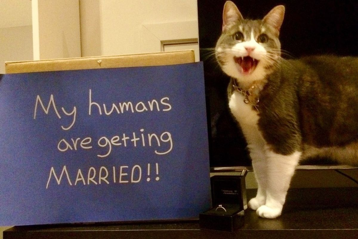 Cat Helps Her Human Parents Announce Their Engagement In a Very Special Way...