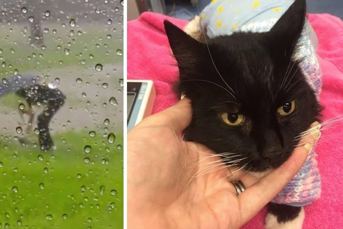Cat Saved from Drowning in Flood is Brought Back to Life in Tiny Sweater..