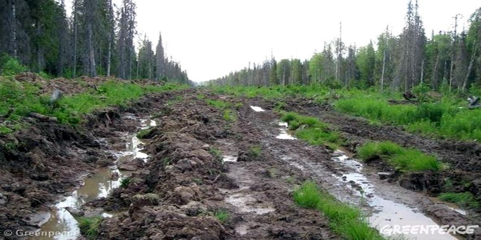How Paper Products Are Destroying Russia's Last Remaining Intact Forests