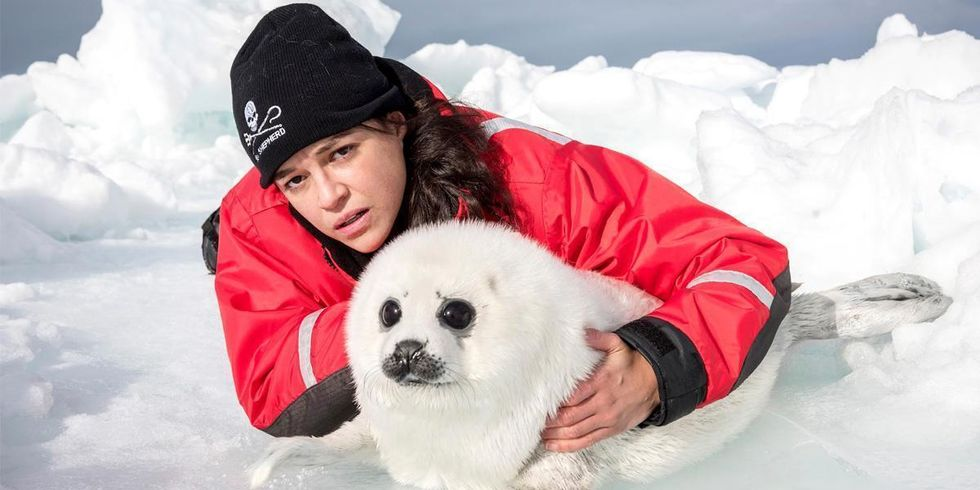 Fast and Furious Star Joins Sea Shepherd to Show Impact of Climate Change on Baby Seals