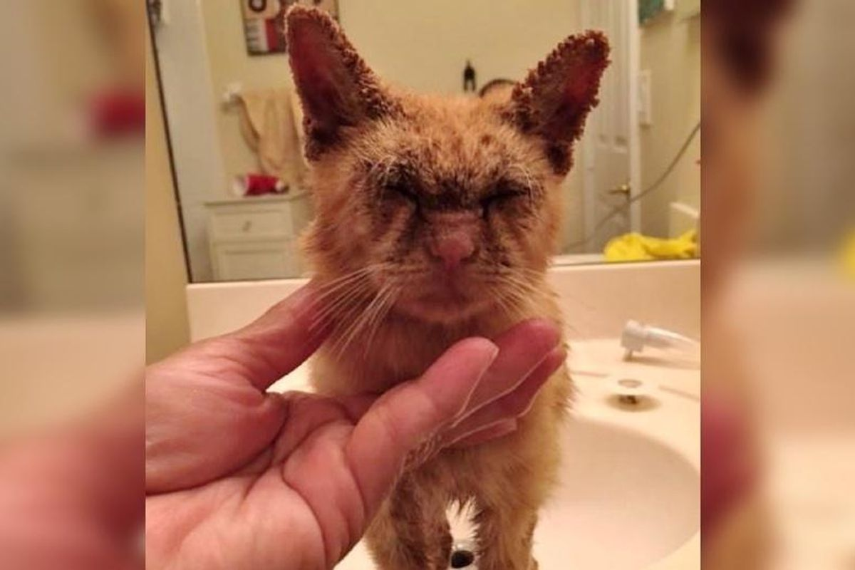 Kitten Couldn't See But Kindness Helps Restore His Beautiful Eyes..