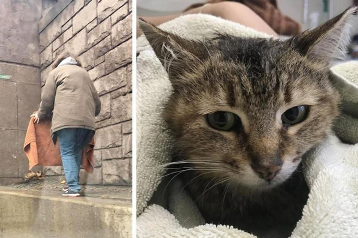 Cat Stranded on Expressway Frozen with Fear Until Woman Came to Her Rescue.. (with Updates)