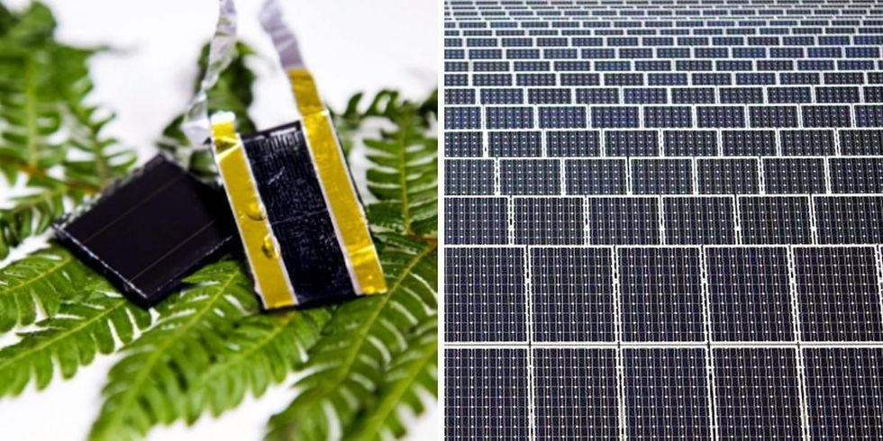 Inspired by Nature: Scientists Find Groundbreaking Solution for Solar Storage