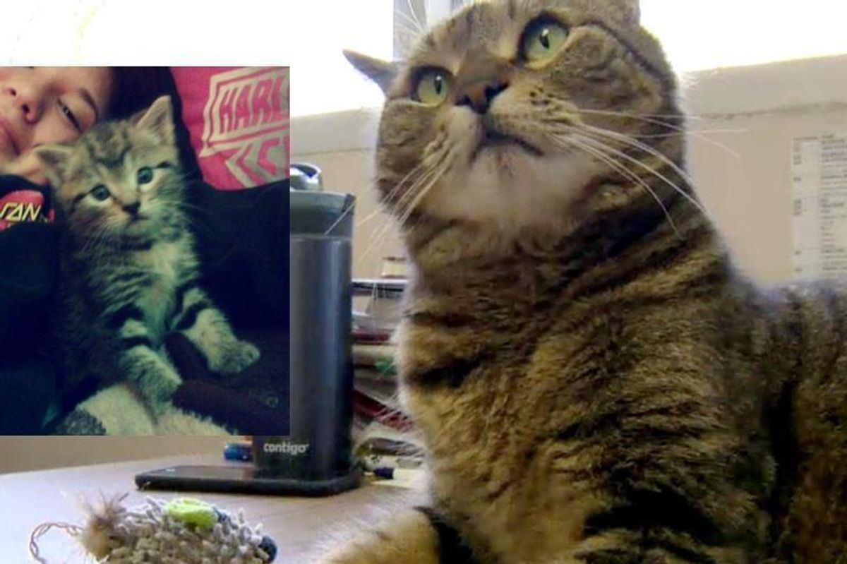 Missing California Cat Showed Up in Ontario Canada 4 Years Later...