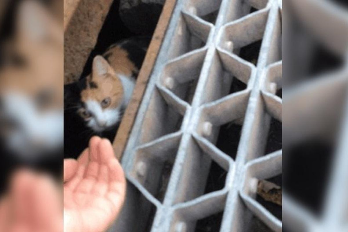 Cat Mom Protects Her Kitten in Storm Drain and Waits for Someone to Rescue Them…