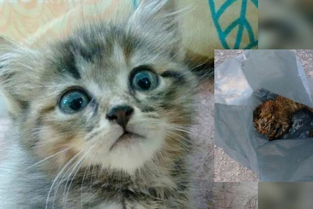 kitten rescued from side of road brought back to life by teacher