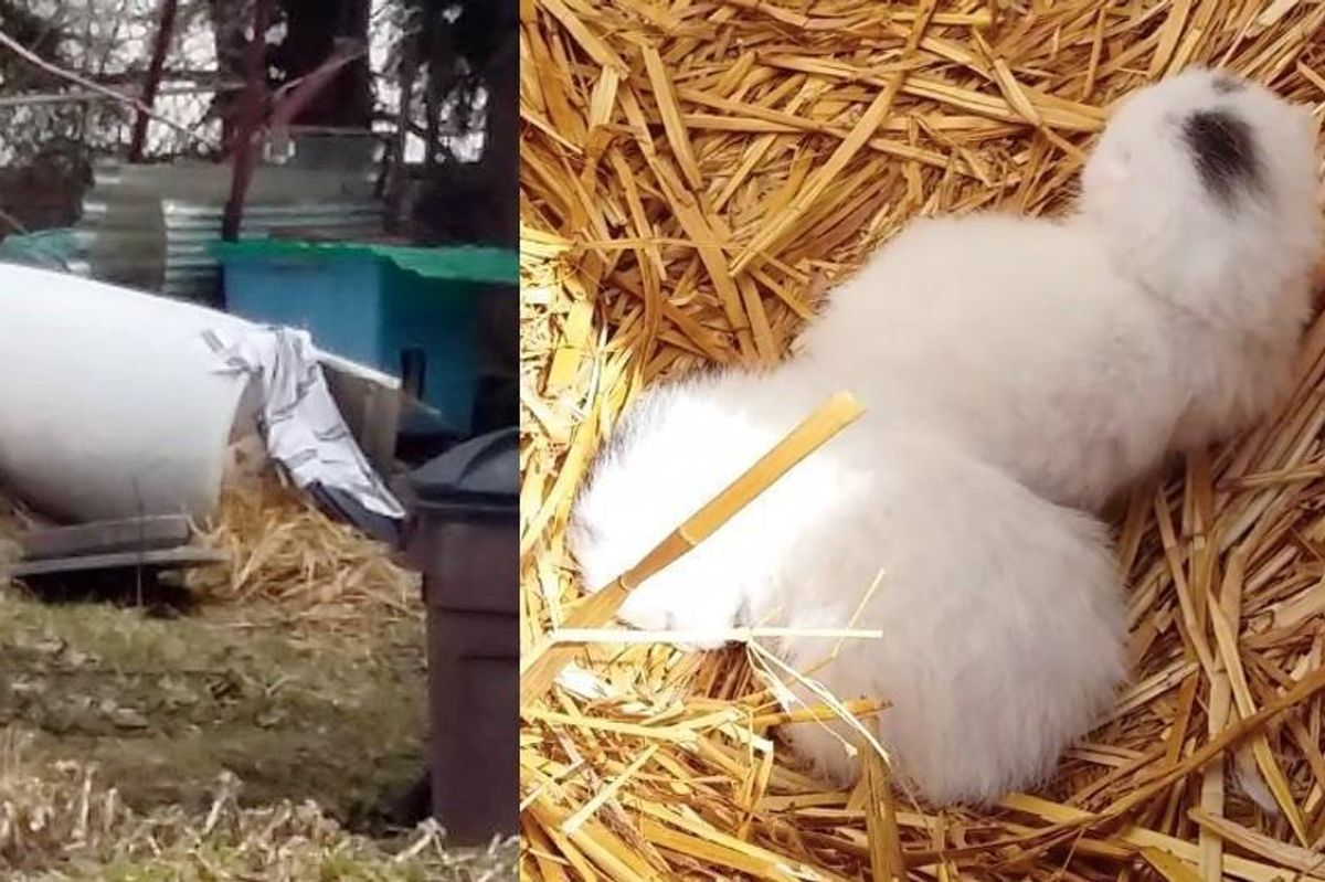 Cat Mama Moved Straw to Nest to Keep Her Babies Safe and Warm Against Bitter Cold..