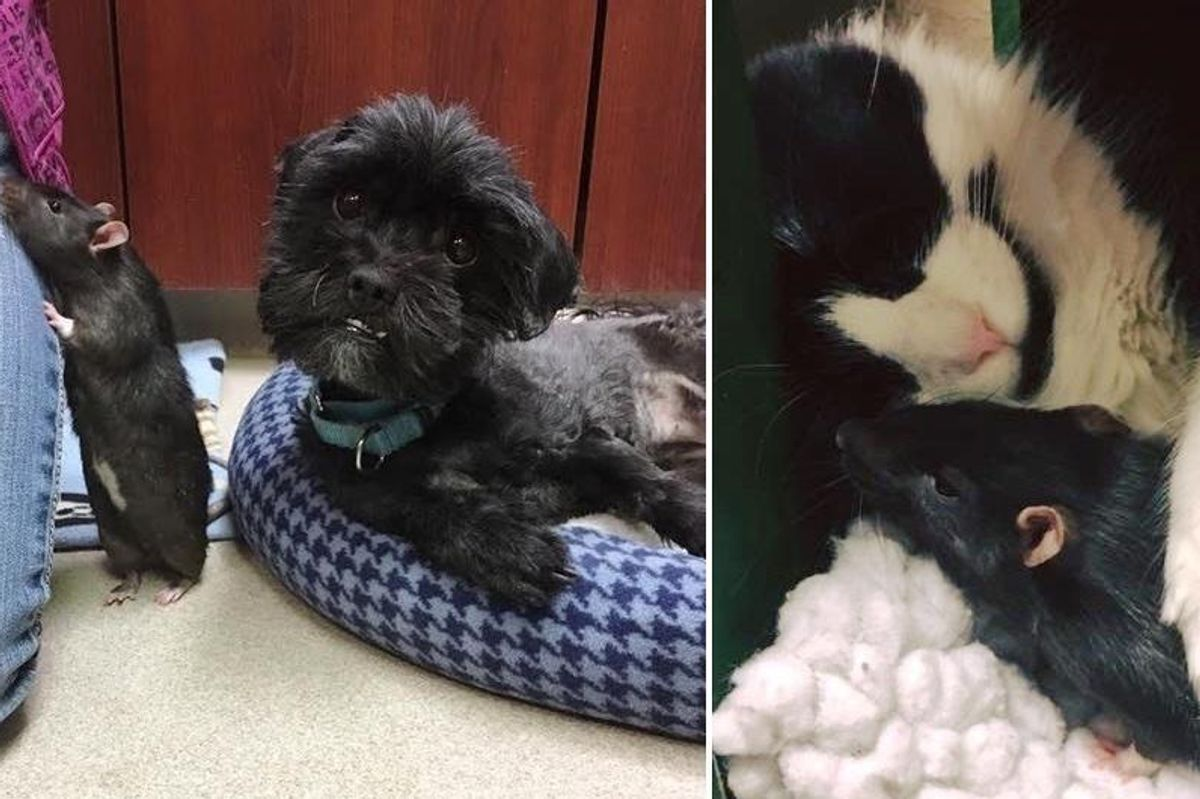 Cat, Dog, Rat Came to Shelter and Couldn't Be Apart, Now A Month Later..