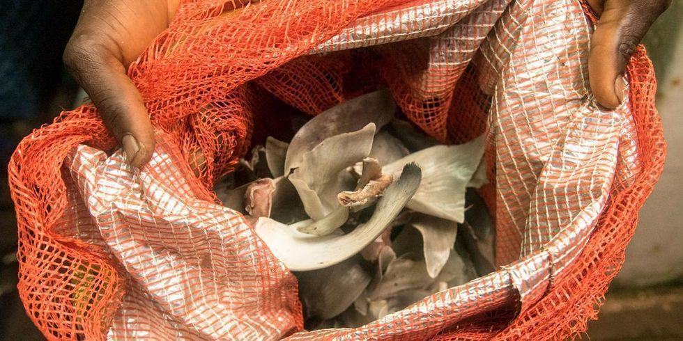 Illegal Shark Fins Found Aboard Foreign Fishing Vessels