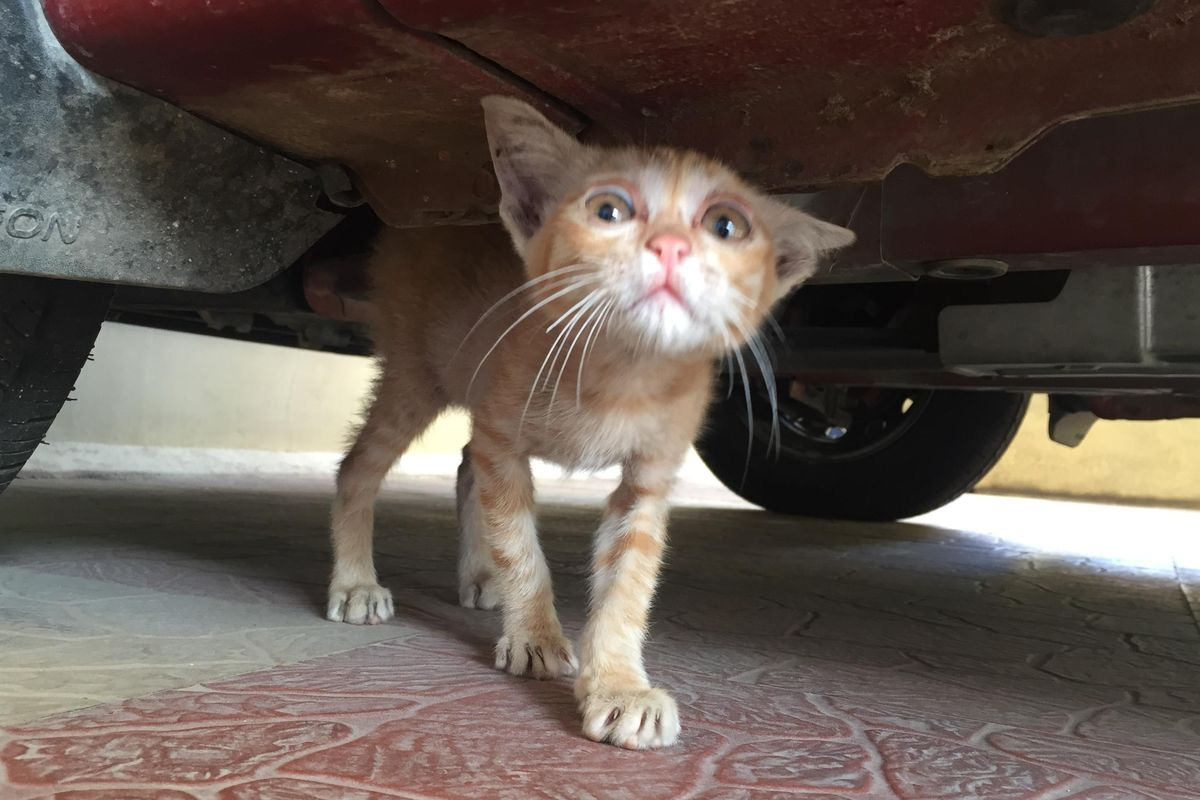 Stray Kitten Found Hiding Underneath Car with Saddest Eyes, What a Difference 6 Months of Love Makes..