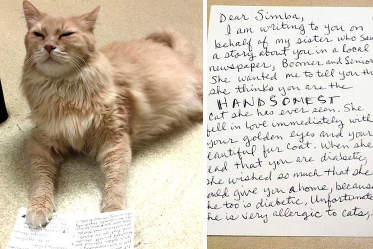 11 Year Old Shelter Cat with Special Needs Receives Letter from Secret Admirer..