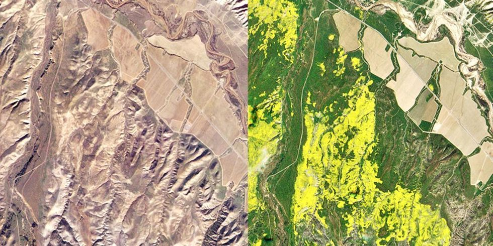 California's Super Bloom So Intense It's Visible From Space