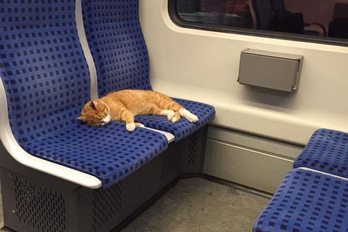 Ginger Cat Saunters Into Subway Train to Take a Nap.. (with updates)