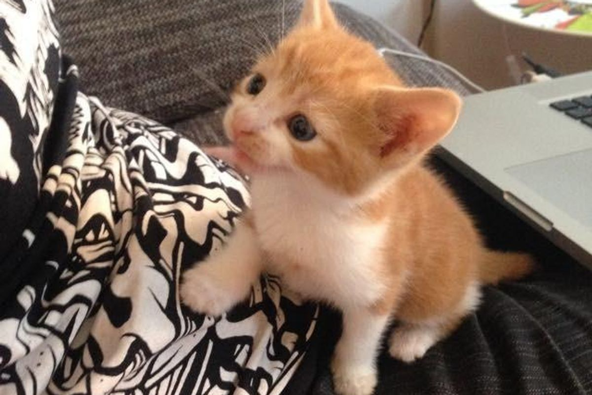 Man Saves Abandoned Kitten Who Cuddles Up to Him Asking for Love...