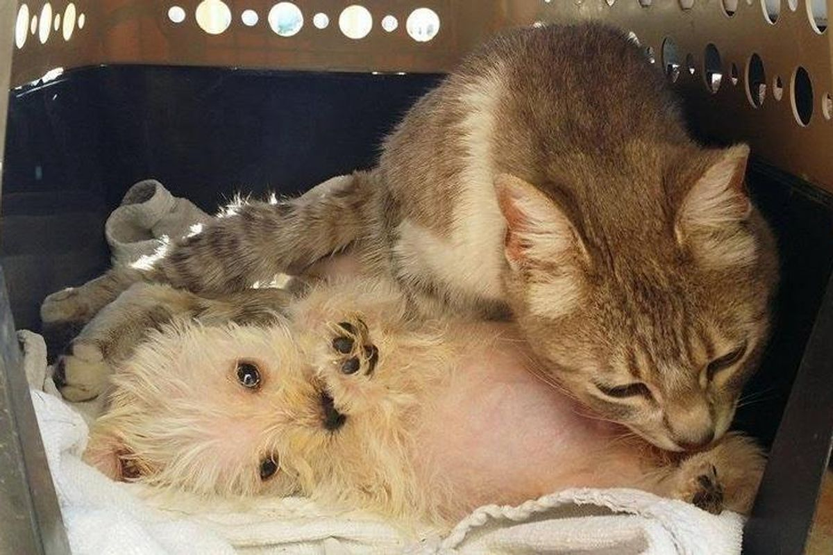Cat Survives Dog Attack Gives Love to Abandoned Puppy Who Needs a Mom...