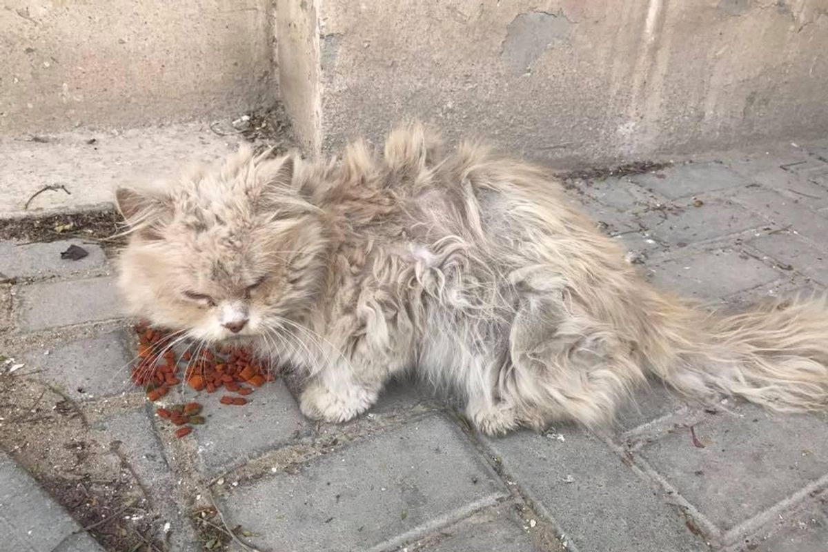 Matted Hungry Stray Who Was Bullied by Other Cats Finds Love and Can't Stop Snuggling..