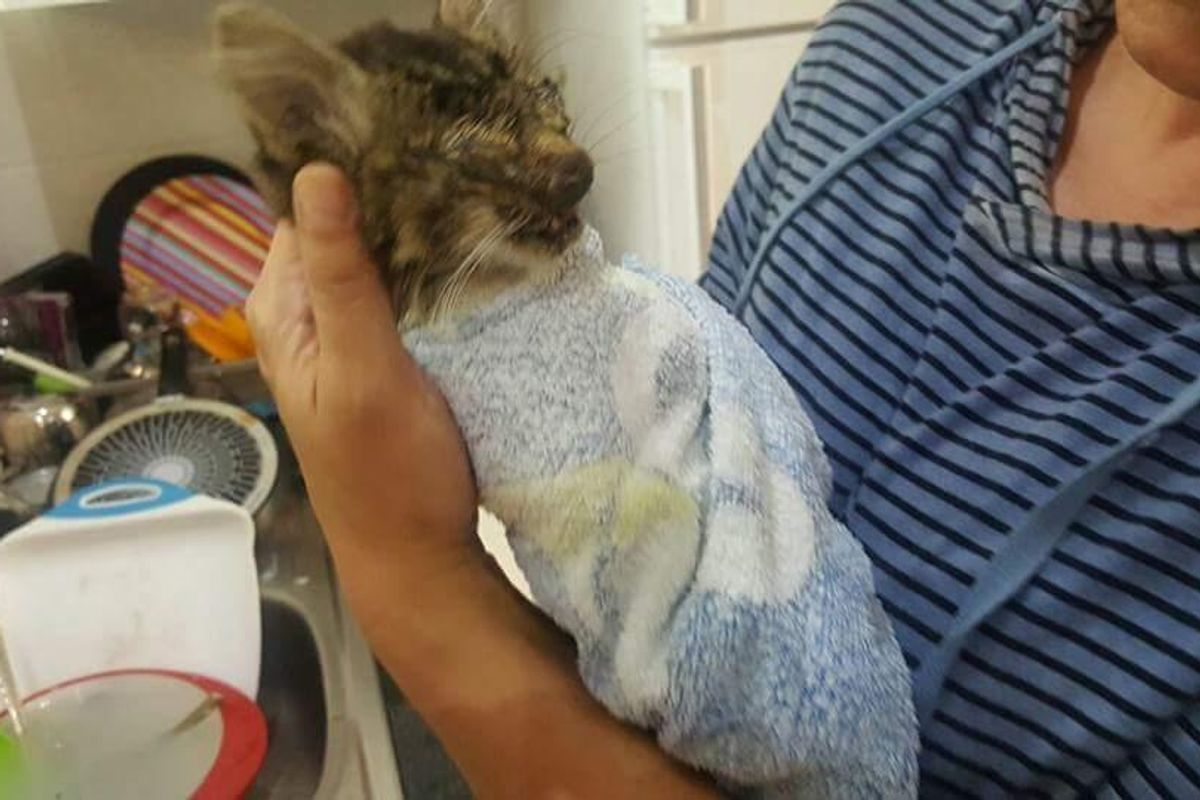 Couple Takes a Chance on Kitten that Others Didn't Believe Would Survive, 3 Days After Rescue..