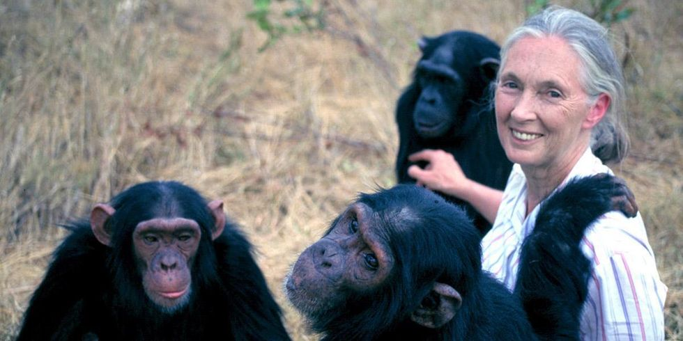 These Jane Goodall Quotes Will Inspire You to Save the World