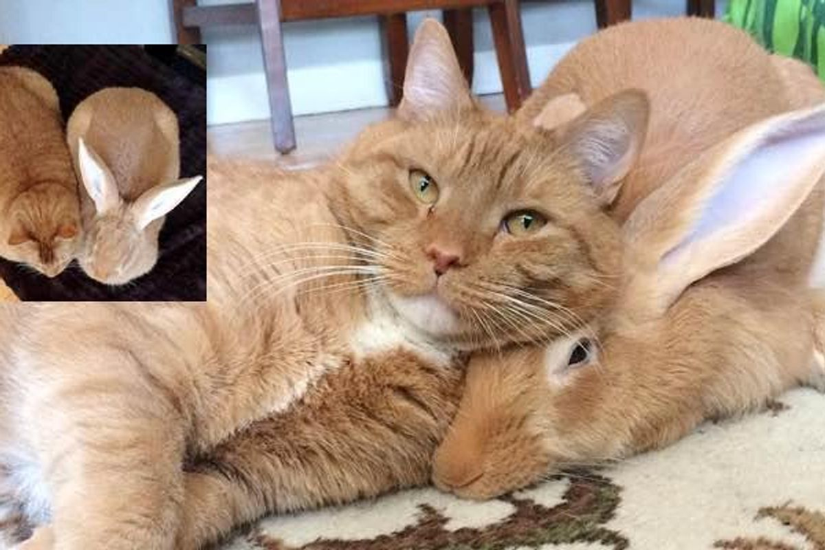 Family Gives Their Ginger Cat an Unlikely Friend and They Form an Incredible Bond..
