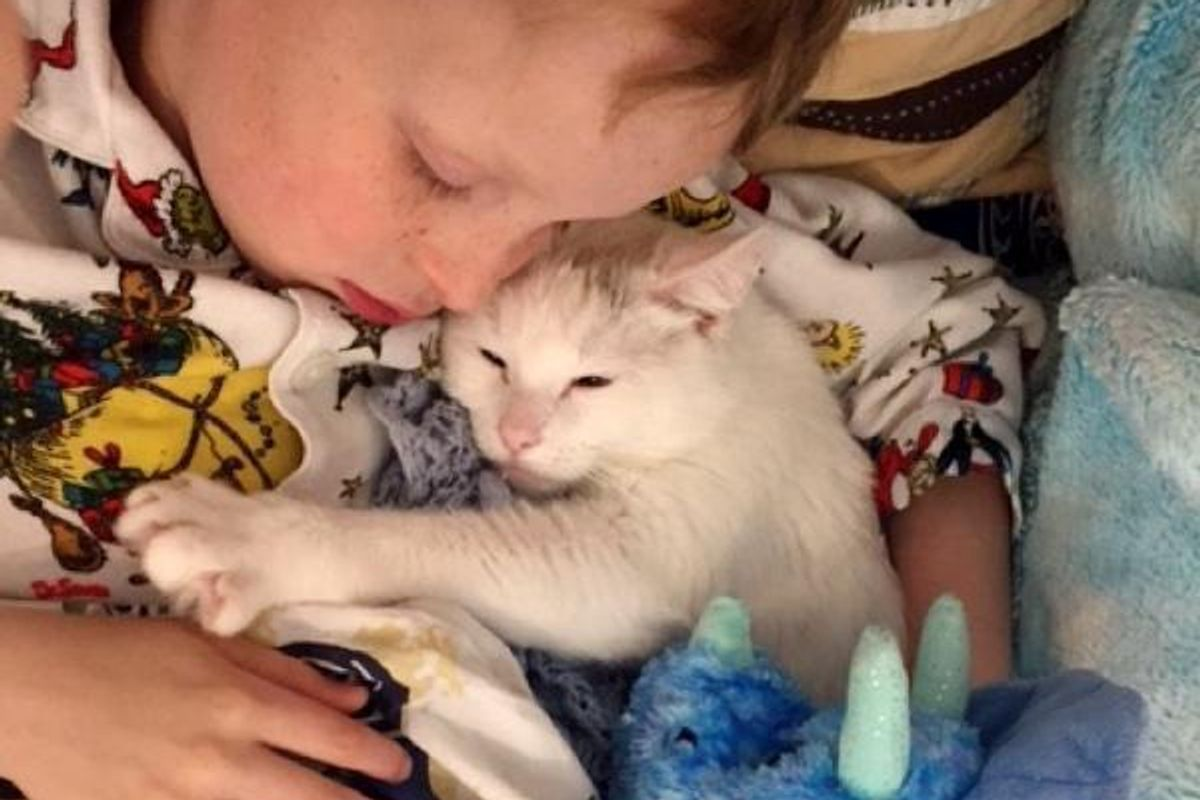 Cat Who Lost Her Own Babies Finds Someone to Love and Care for...