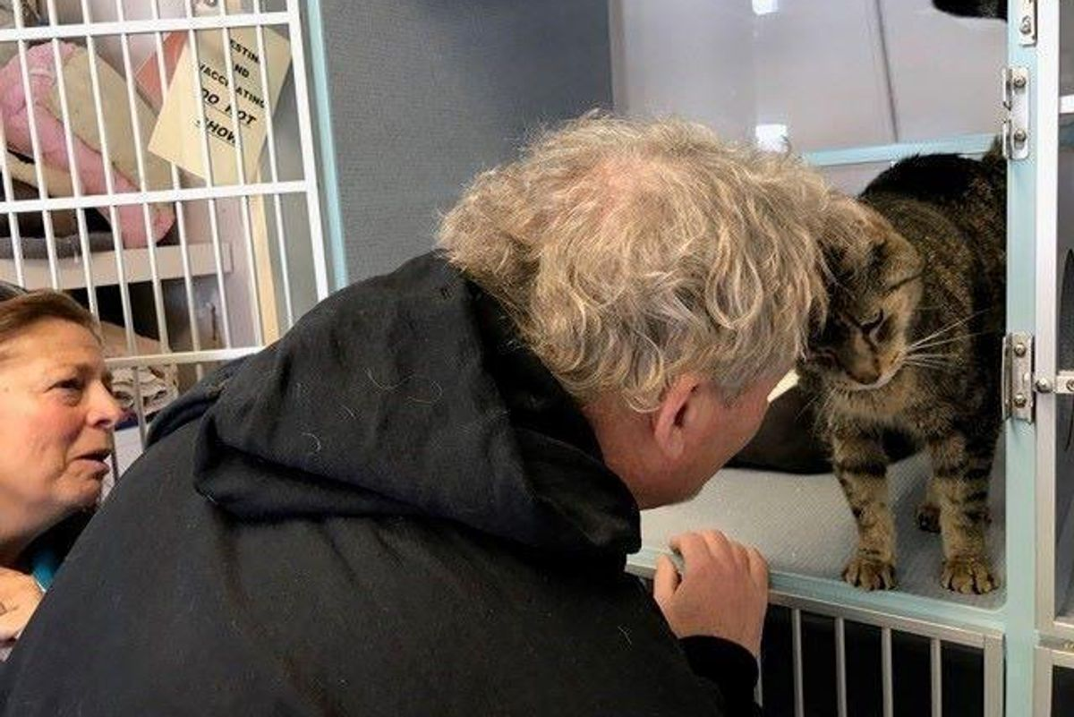 Family Saw Photos of Their Missing Cat on Shelter Page, Tearful Reunion After 2 Years...