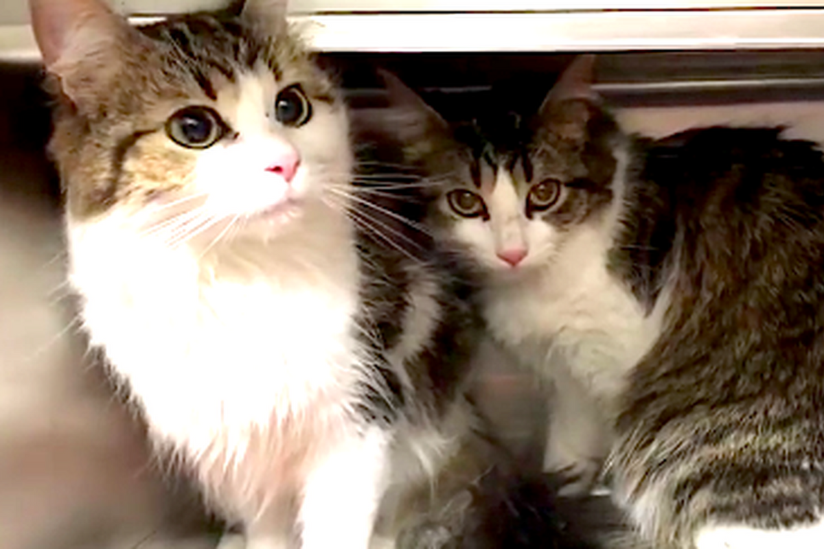 Bonded Cats Cling to Each Other for Comfort After They Were Given Up to Shelter.. (with Updates)