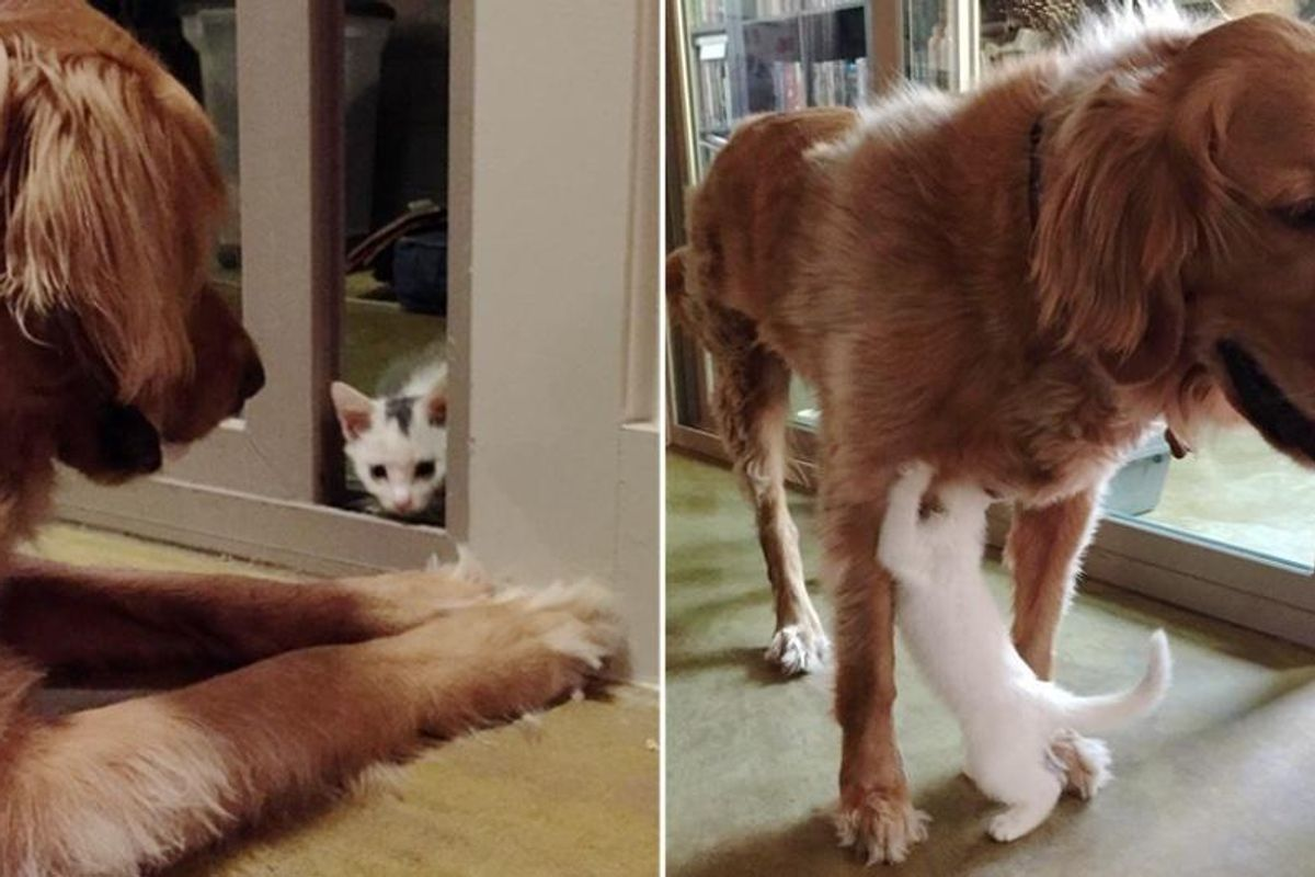 Dog Takes in Motherless Kitten and Raises Him as His Own, Now 2 Years Later