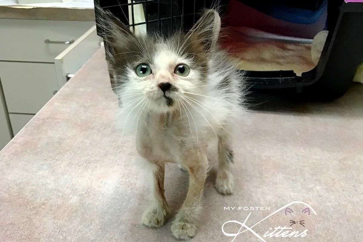 Woman Saves Sick Kitten that Others Gave Up and Helps Her Get Her Beautiful Fluff Back.. (with Updates)