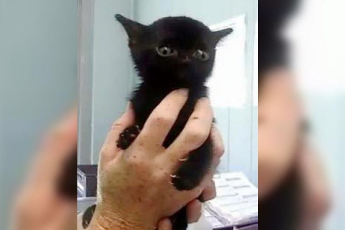 Very Special Kitten Saved in Nick of Time Blossoms into Beautiful Panther Cat..