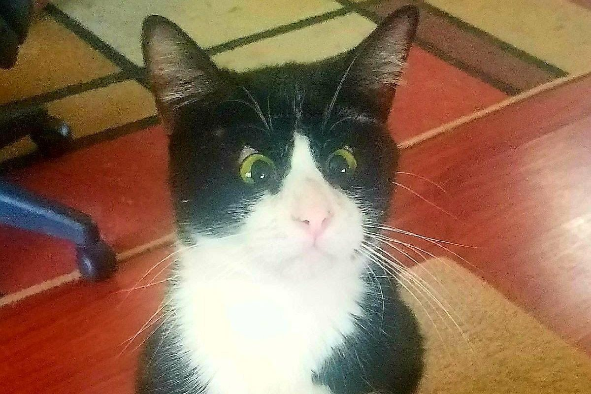 Lost Kitten Looks at Rescuers with Those Eyes, Asking Them to Be His Humans...