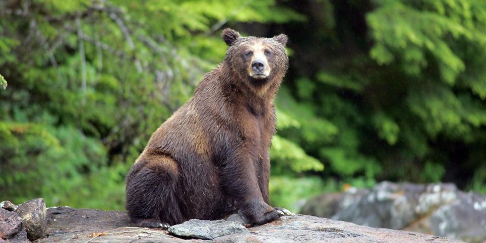 David Suzuki: It's Time to End BC's Cruel Grizzly Bear Trophy Hunt